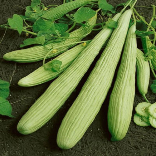 Long Melon Kakri